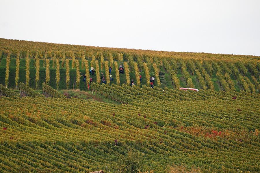 Weingut Ziereisen 1841