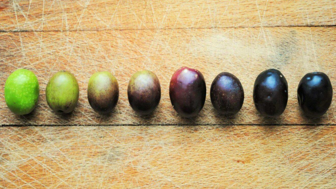 Was ist der Unterschied zwischen schwarzen und grünen Oliven?